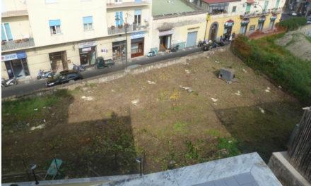 """Meta/ """"Ordinate il ripristino dell'agrumeto sul Corso Italia"""": la formale richiesta al Comune"""
