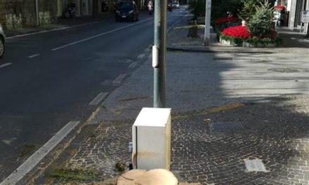 """Sorrento/ """"Fermiamo le motoseghe"""": l'appello di Claudio d'Esposito dopo l'abbattimento di altri sei alberi lungo il Corso Italia"""
