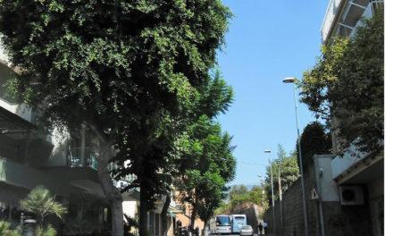 Sorrento/ Taglio alberi davanti al Gardenia: il mistero si infittisce