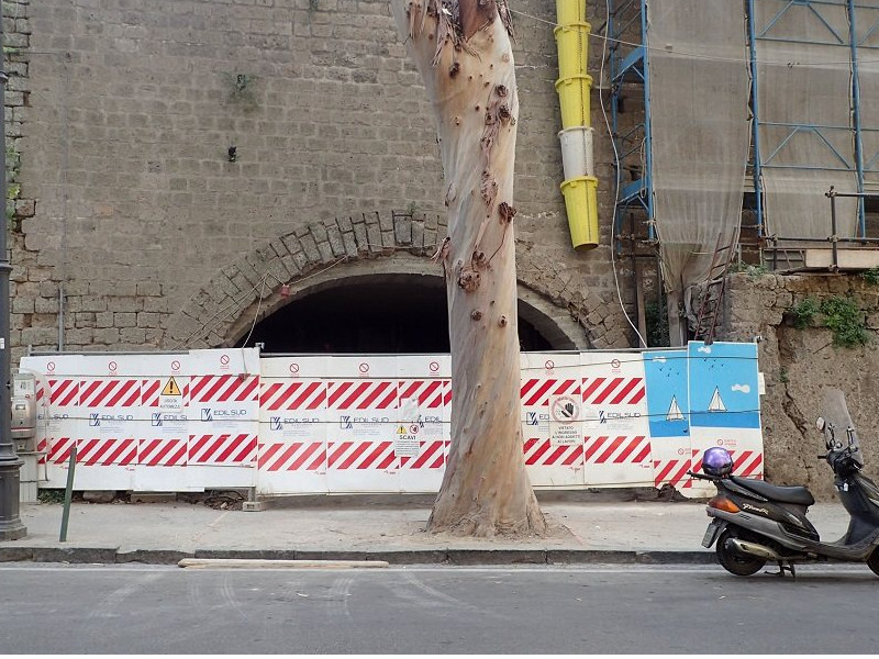 """Sorrento/ """"Sarà una strage: a rischio 80 alberi"""": l'allarme lanciato dal WWF"""