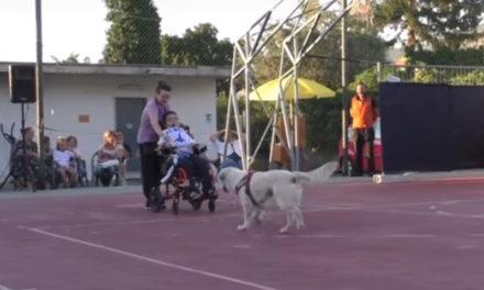 """Piano di Sorrento/ Perché Canis Sapiens non è """"canielli"""", ma anche questo… (VIDEO-EMOZIONI)"""