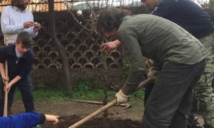Sorrento/ Il WWF pianta gli alberi ed il Comune li abbatte, arriva la diffida da parte dell'associazione ambientalista