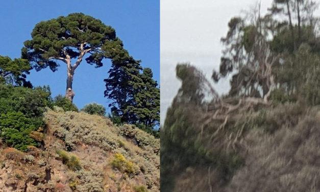 """Piano di Sorrento/ """"Con il pino di Sopramare è morto un pezzo della Città…bisogna cambiare: il monito di Claudio d'Esposito (WWF)"""