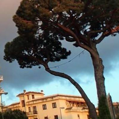 Piano di Sorrento – Sant'Agnello/ Il pino sta meglio che nel 2014, il pericolo sarebbe tagliarlo: l'esito della perizia del WWF