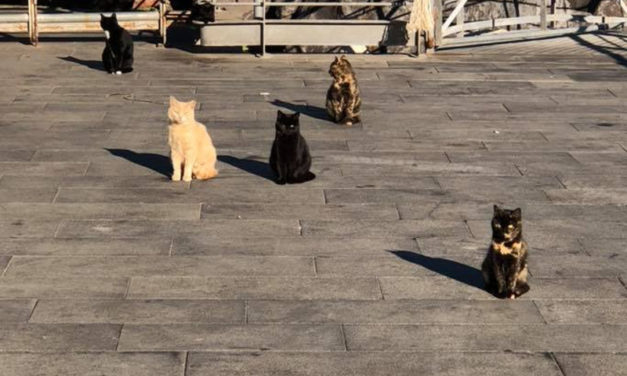 Piano di Sorrento/ Troppi gatti a Marina di Cassano, ma non ci sono soldi per combattere il randagismo: la lettera aperta dell'ENPA al Sindaco Iaccarino