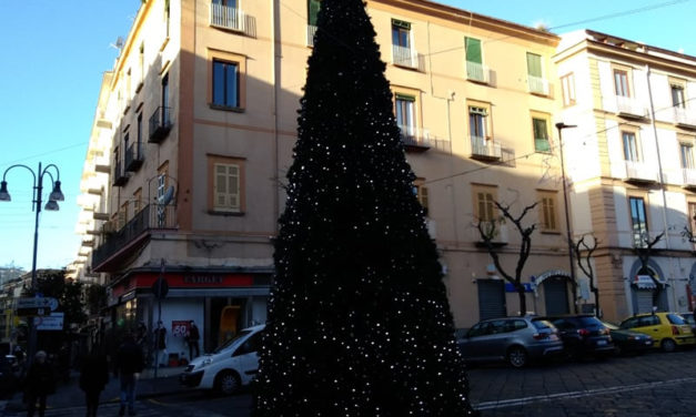 """Piano di Sorrento/ Arriva Ritardacchio l'albero """"mistico"""" di Piazza Cota"""