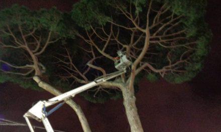 Piano di Sorrento – Sant'Agnello/ Riapre Piazza Mercato: il pino è salvo