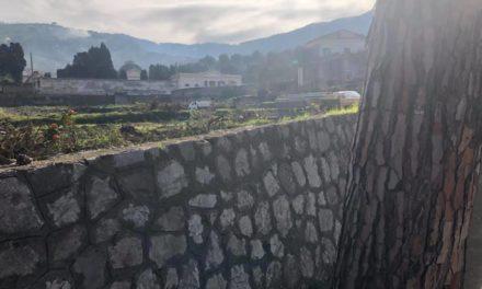 """Sorrento/ """"Cosa si nasconde dietro la distruzione dell'agrumeto di via San Renato?"""": i dubbi di Rosario Lotito (M5S)"""