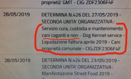 """Sant'Agnello/ Il Comune manda in affido i cani """"caganti""""…ma anche quelli che non cagano"""