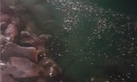 Piano di Sorrento/ Scia di schiuma sospetta a Marina di Cassano (Foto-Notizia)