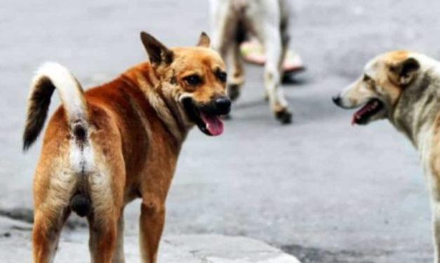 Sant'Agnello/ Aggredita da un cane randagio: il Comune costretto a risarcirla