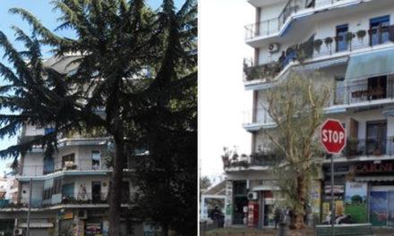 Sorrento/ Kaputt! Le motoseghe fanno fuori anche il grosso cedro del Libano di via degli Aranci