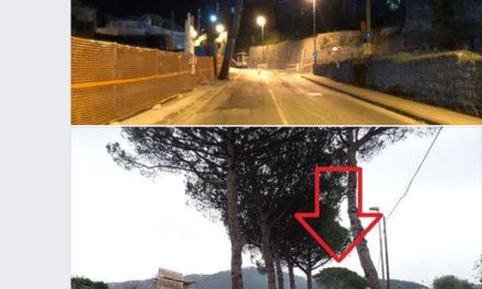 """Sorrento/ """"Fermate questa strage, stanno abbattendo anche il grosso pino innanzi alla centrale TERNA"""": l'appello di Claudio d'Esposito"""