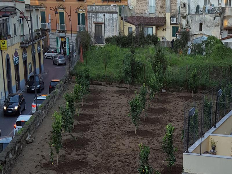Meta/ Tornano gli alberi nel parcheggio di Corso Italia (FOTO-NOTIZIA)