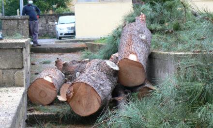 """Piano di Sorrento/ """"Prima abbattono gli alberi e poi si chiedono il perché"""": l'intervento di Claudio d'Esposito"""
