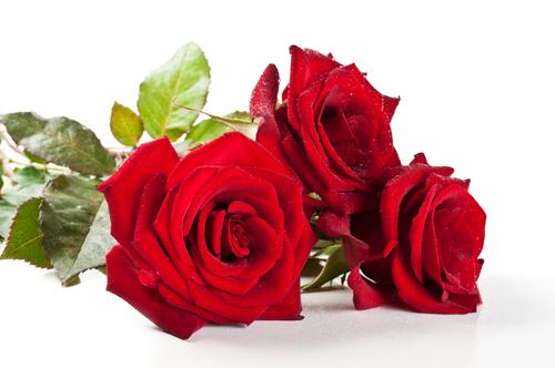 """Il cuscino di Maelka / Rose rosse """"al volo"""" per me"""