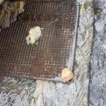 Sant'Agnello – San Giuseppe/ Fogna rotta e merda in strada cittadini stanchi di segnalare