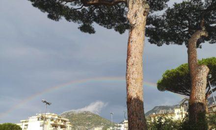 Sant'Agnello/ Oggi la perizia al pino di Piazza Mercato: pagherà il WWF. Intanto Sagristani sceglie la linea del silenzio, ma…