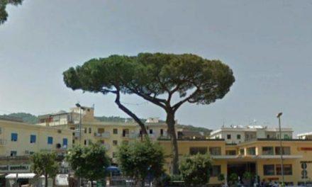 """Piano di Sorrento – Sant'Agnello/ """"Per forza vogliono abbattere il pino di Piazza Mercato e poi lasciano in piedi alberi pericolosi"""": la denuncia di Claudio d'Esposito"""