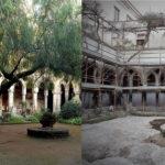 Sorrento/ Nulla da fare: abbattuto l'albero del Chiostro. Il comunicato del WWF