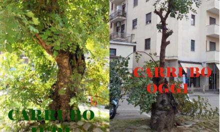 Piano di Sorrento/ Dopo la condanna a morte del carrubo di Piazza Mercato, pronta un'altra strage di alberi