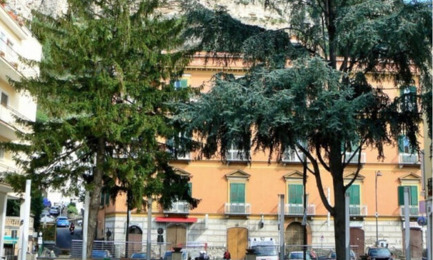 Meta/ Ci risiamo: a rischio abbattimento l'abete rosso di Piazza Vittorio Veneto