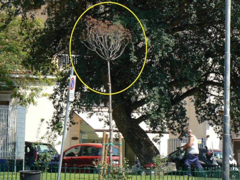 """Piano di Sorrento/ """"Il verde pubblico è in mano a degli incompetenti"""": l'affondo di Claudio d'Esposito (WWF)"""